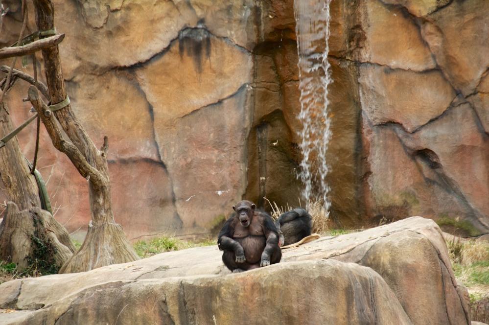 Ape Scale