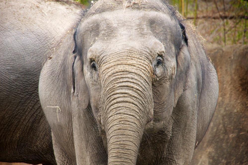 Elephant texture 2